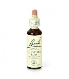 Dr. Bach Chestnut Bud - Flor Bach (20 ml.)