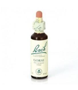 Dr. Bach Gorse - Flor Bach (20 ml.)